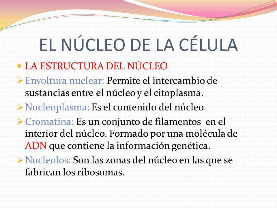 EL NÚCLEO DE LA CÉLULA LA ESTRUCTURA DEL NÚCLEO