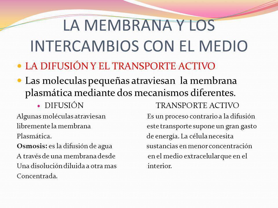 LA MEMBRANA Y LOS INTERCAMBIOS CON EL MEDIO