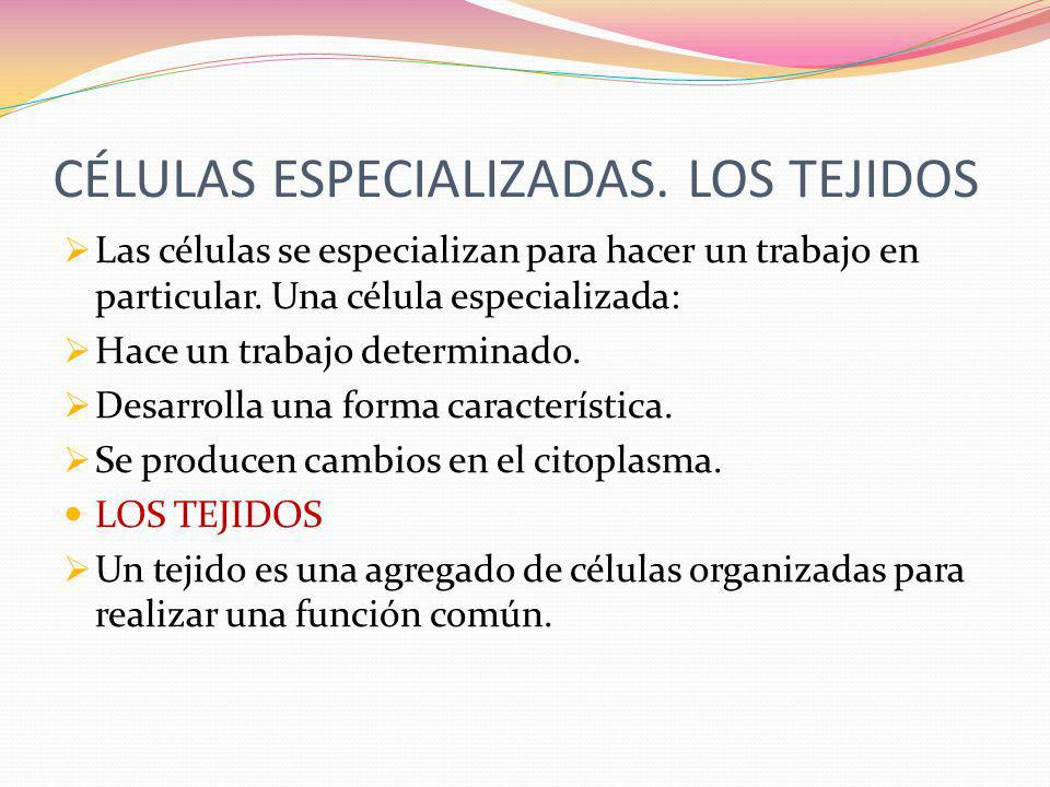 CÉLULAS ESPECIALIZADAS. LOS TEJIDOS