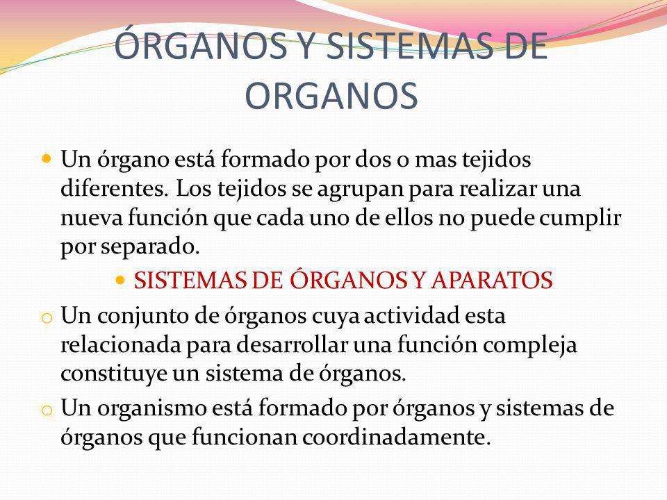 ÓRGANOS Y SISTEMAS DE ORGANOS