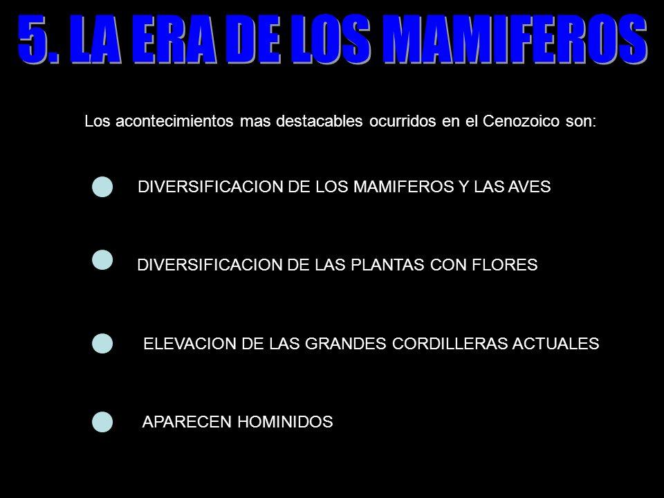 5. LA ERA DE LOS MAMIFEROS Los acontecimientos mas destacables ocurridos en el Cenozoico son: DIVERSIFICACION DE LOS MAMIFEROS Y LAS AVES.
