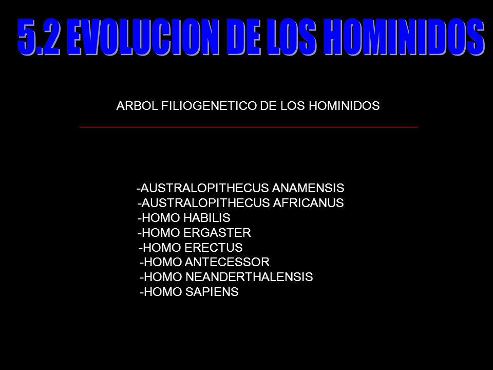 5.2 EVOLUCION DE LOS HOMINIDOS