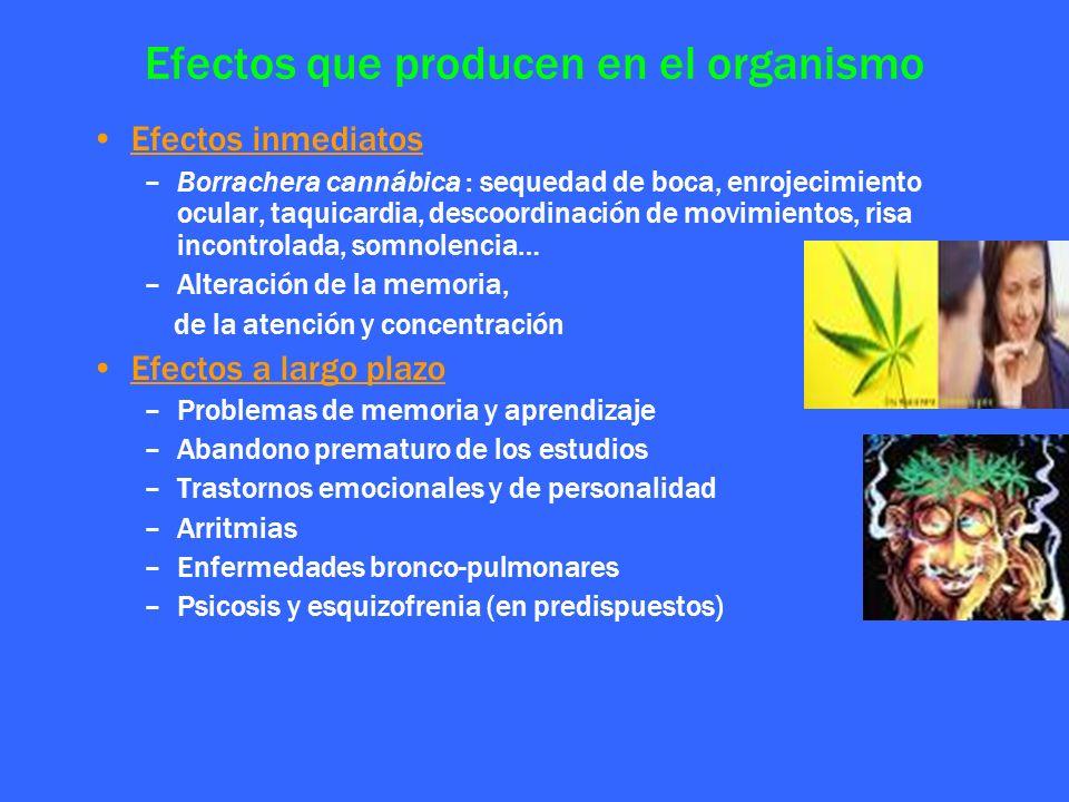Efectos que producen en el organismo