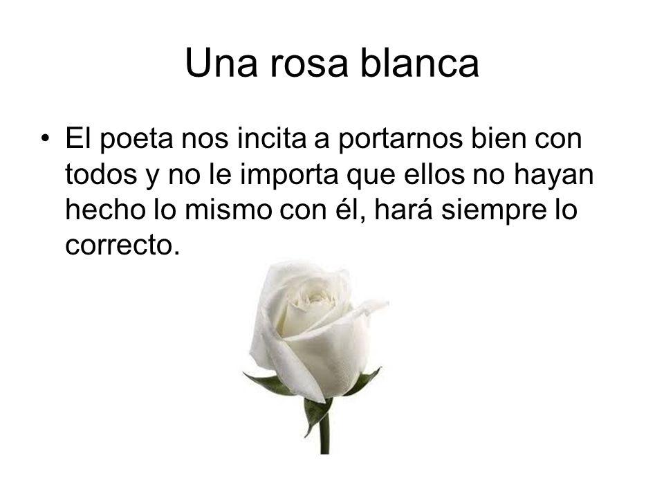 Una rosa blanca El poeta nos incita a portarnos bien con todos y no le importa que ellos no hayan hecho lo mismo con él, hará siempre lo correcto.