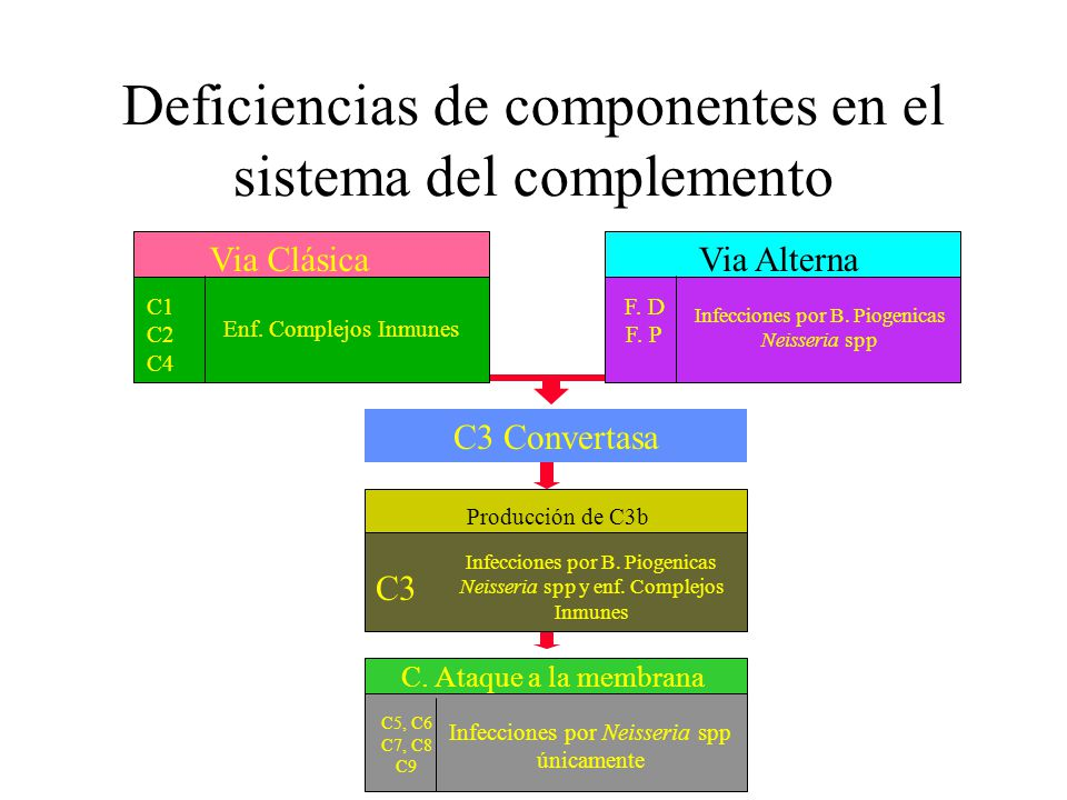 Deficiencias de componentes en el sistema del complemento