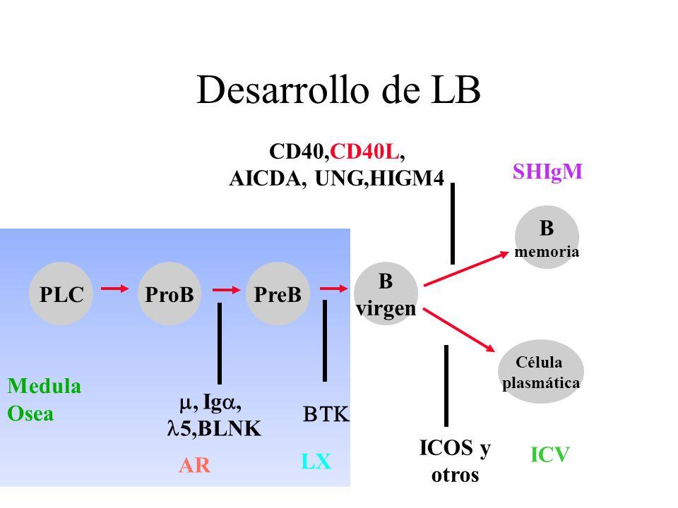 Desarrollo de LB CD40,CD40L, AICDA, UNG,HIGM4 SHIgM B Medula Osea PLC