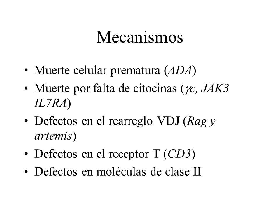 Mecanismos Muerte celular prematura (ADA)