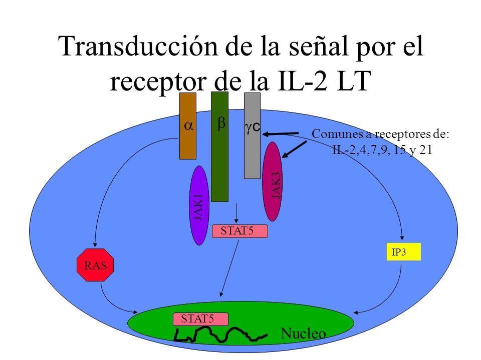 Transducción de la señal por el receptor de la IL-2 LT