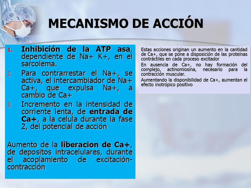 MECANISMO DE ACCIÓN Inhibición de la ATP asa, dependiente de Na+ K+, en el sarcolema.