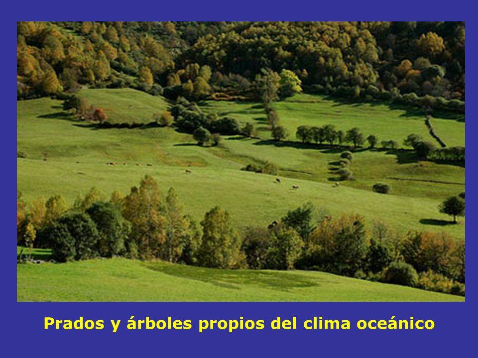 Prados y árboles propios del clima oceánico