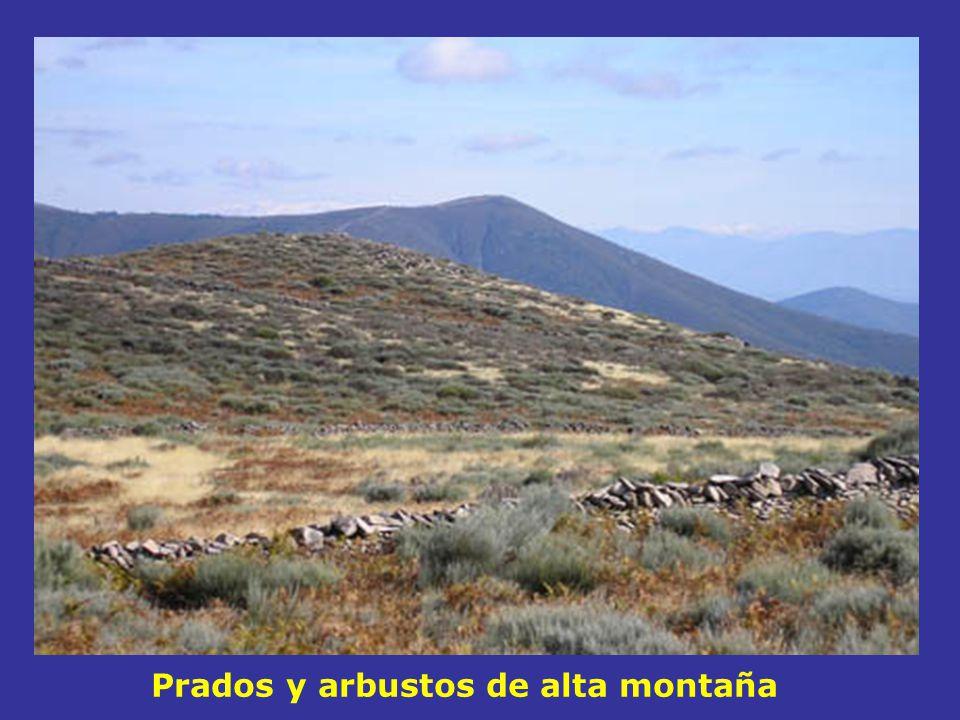 Prados y arbustos de alta montaña