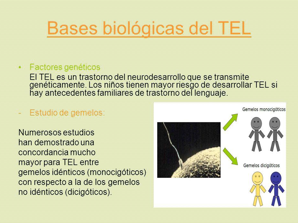 Bases biológicas del TEL