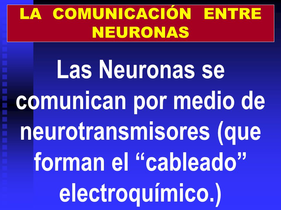 LA COMUNICACIÓN ENTRE NEURONAS