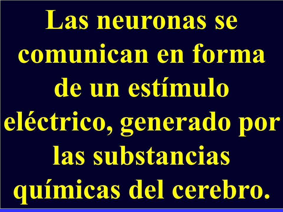 Las neuronas se comunican en forma de un estímulo eléctrico, generado por las substancias químicas del cerebro.