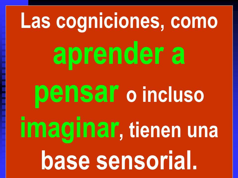 Las cogniciones, como aprender a pensar o incluso imaginar, tienen una base sensorial.