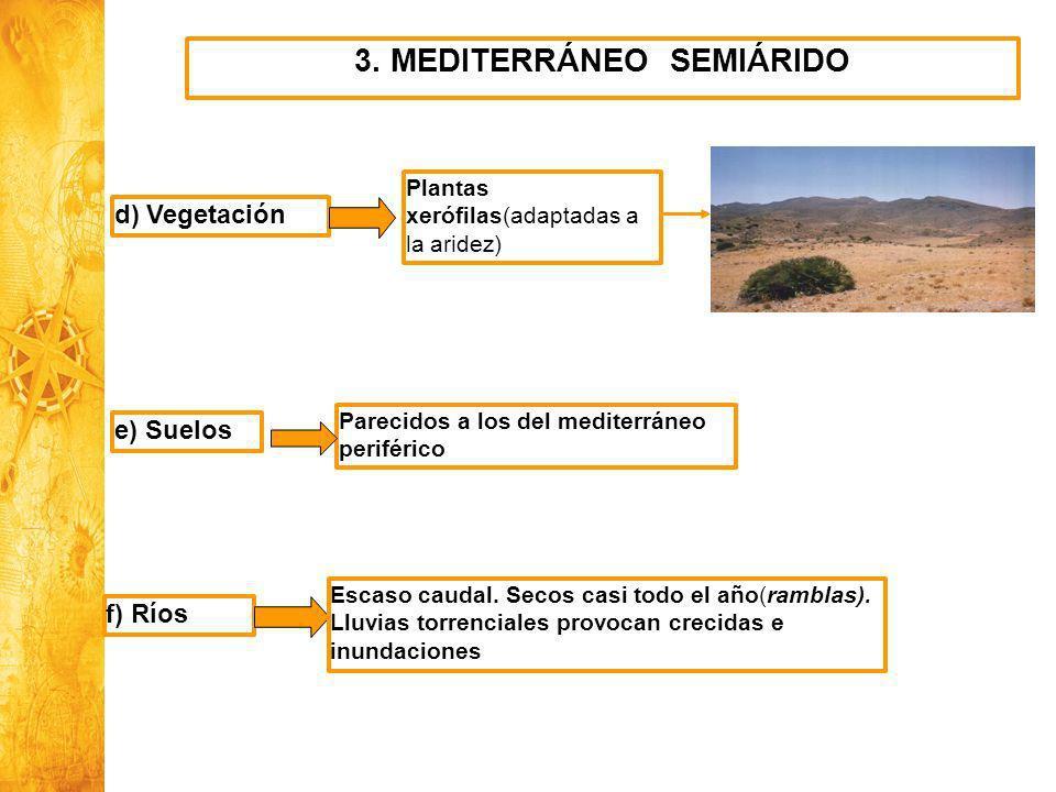 3. MEDITERRÁNEO SEMIÁRIDO