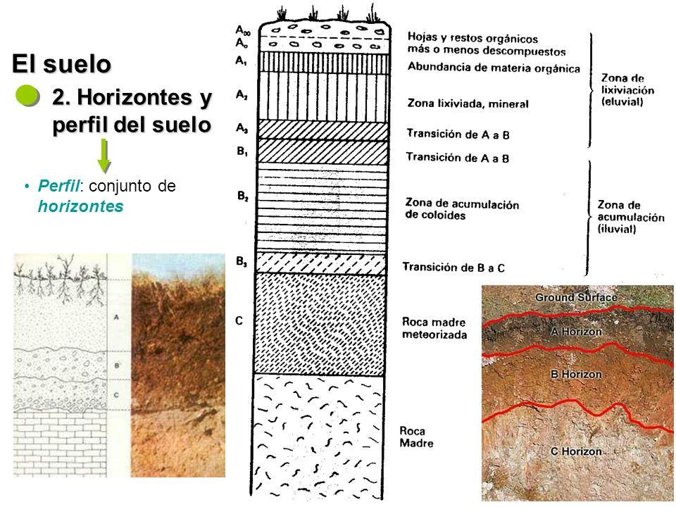 El suelo 2. Horizontes y perfil del suelo