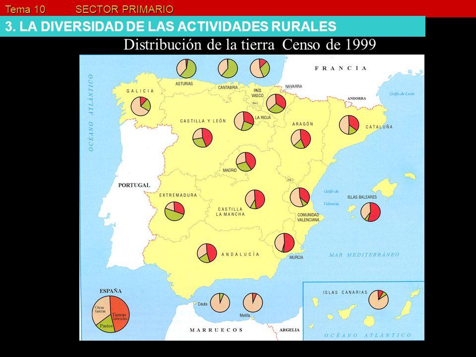 Distribución de la tierra Censo de 1999