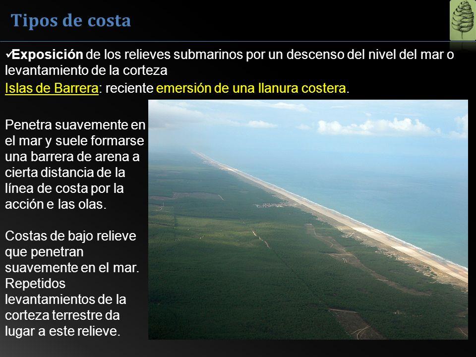 Tipos de costa Exposición de los relieves submarinos por un descenso del nivel del mar o levantamiento de la corteza.