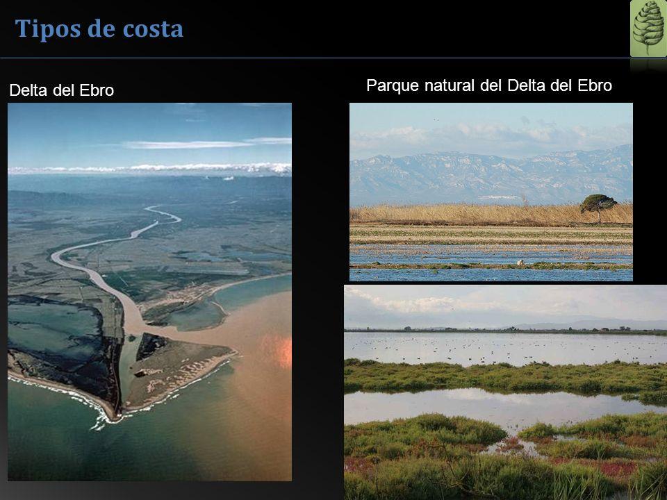Tipos de costa Parque natural del Delta del Ebro Delta del Ebro