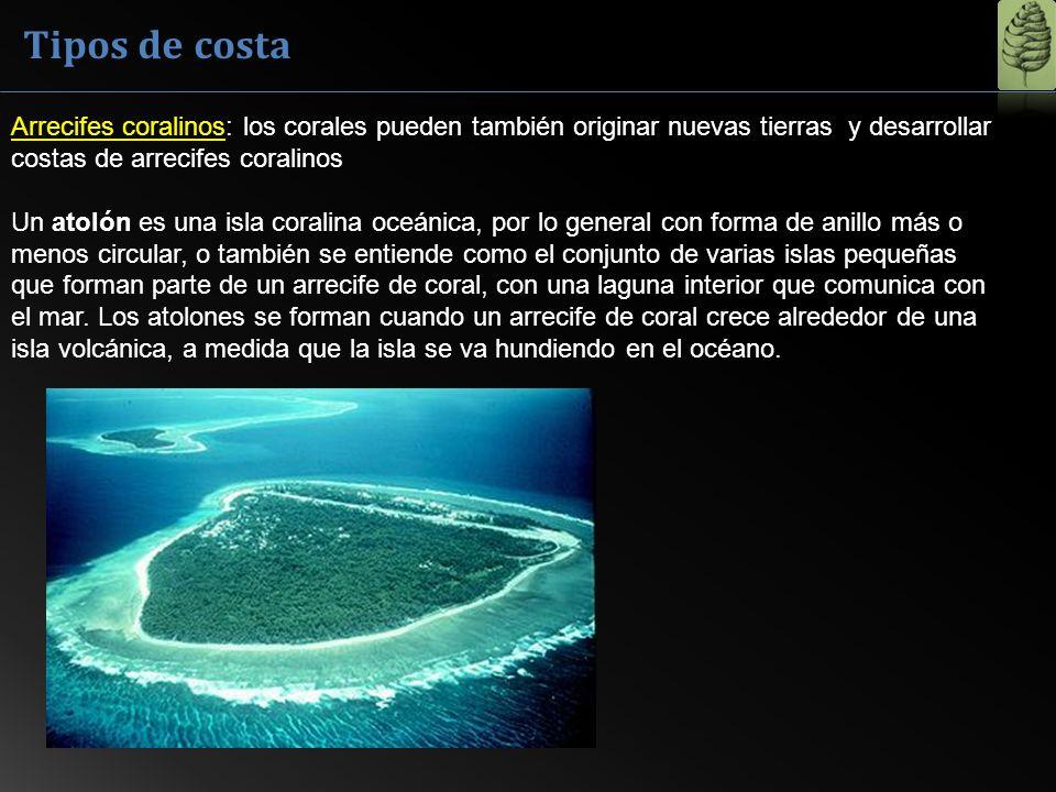 Tipos de costa Arrecifes coralinos: los corales pueden también originar nuevas tierras y desarrollar costas de arrecifes coralinos.