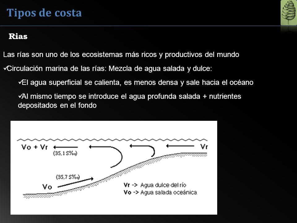 Tipos de costaRias. Las rías son uno de los ecosistemas más ricos y productivos del mundo.