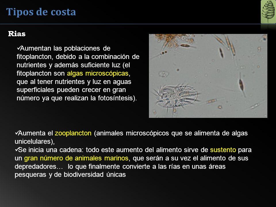 Tipos de costa Rias.