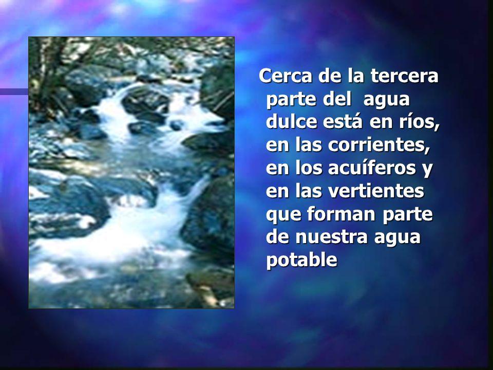 Cerca de la tercera parte del agua dulce está en ríos, en las corrientes, en los acuíferos y en las vertientes que forman parte de nuestra agua potable