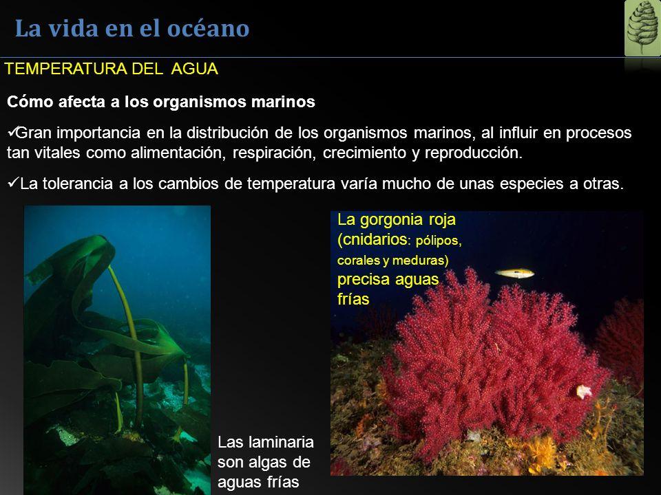 La vida en el océano TEMPERATURA DEL AGUA