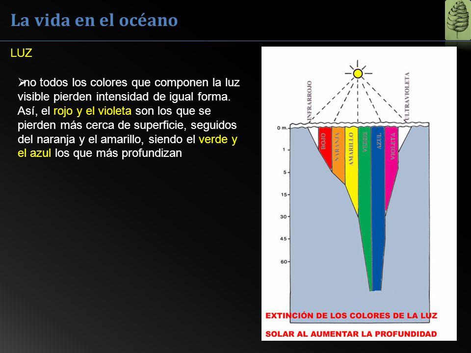 La vida en el océano LUZ.