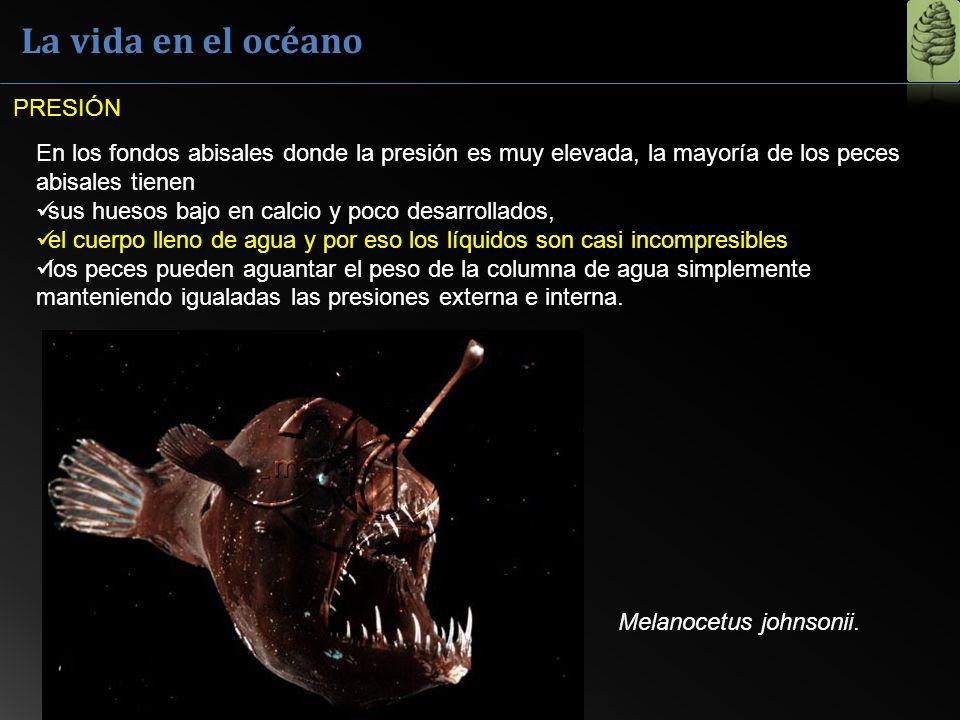 La vida en el océano PRESIÓN
