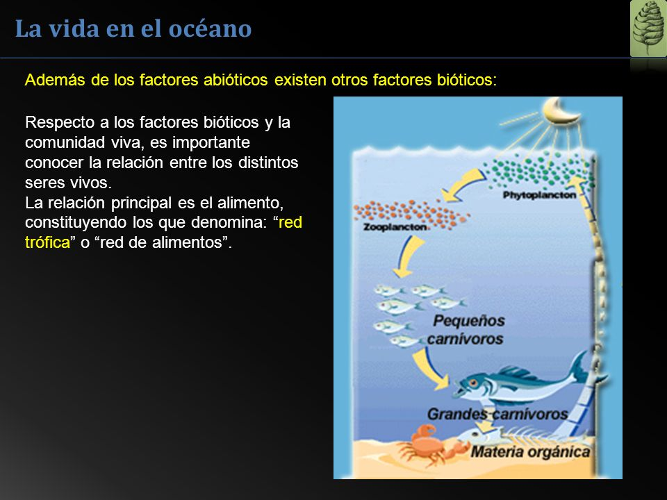 La vida en el océano Además de los factores abióticos existen otros factores bióticos: