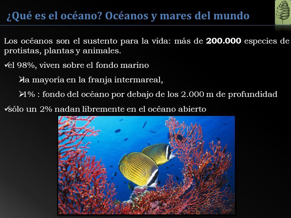 ¿Qué es el océano Océanos y mares del mundo