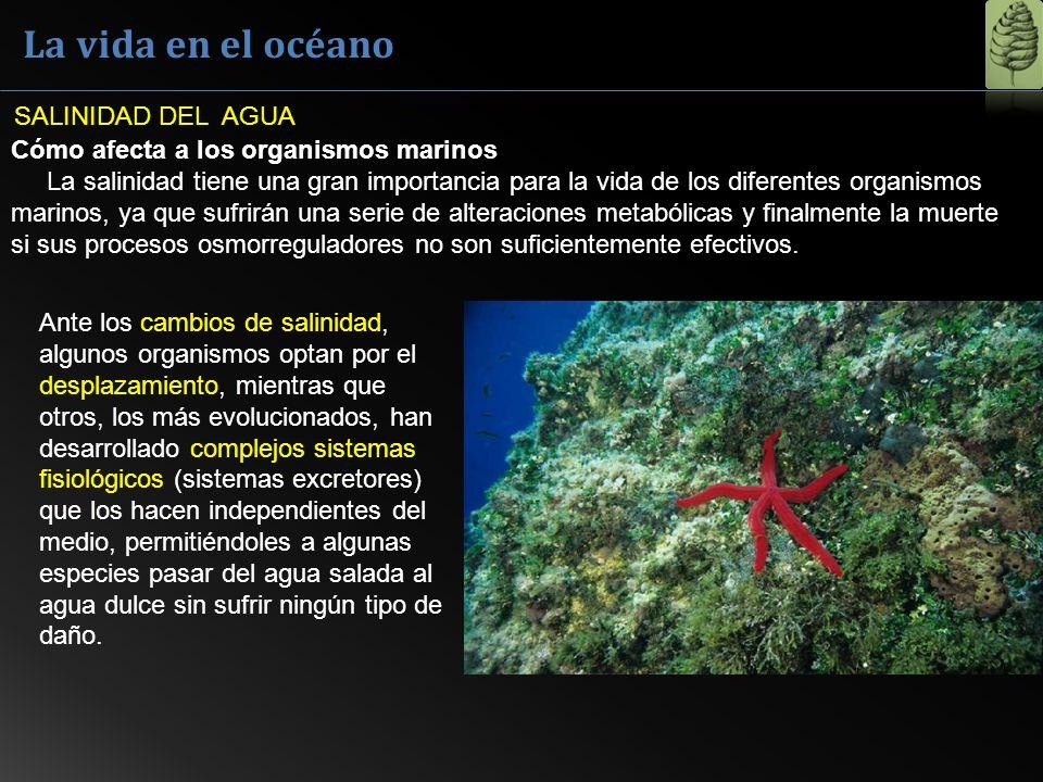 La vida en el océano SALINIDAD DEL AGUA