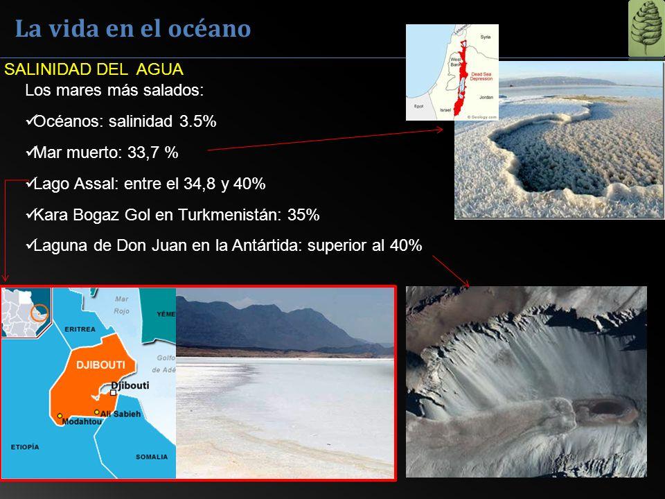 La vida en el océano SALINIDAD DEL AGUA Los mares más salados: