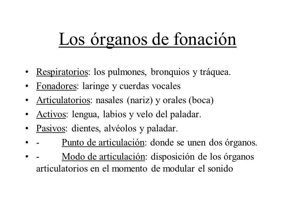 Los órganos de fonación