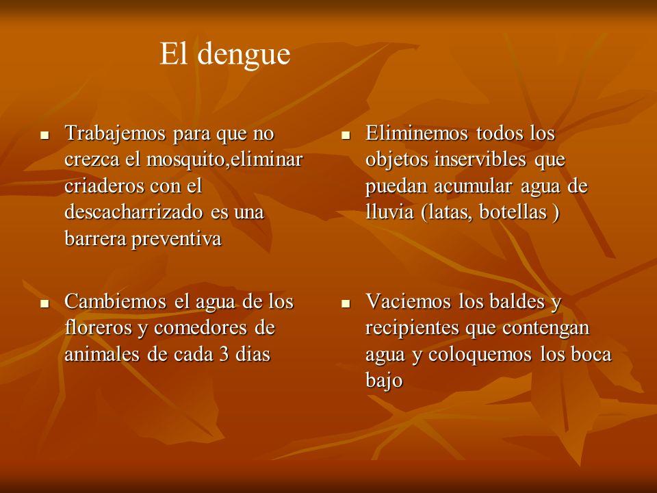 El dengue Trabajemos para que no crezca el mosquito,eliminar criaderos con el descacharrizado es una barrera preventiva.