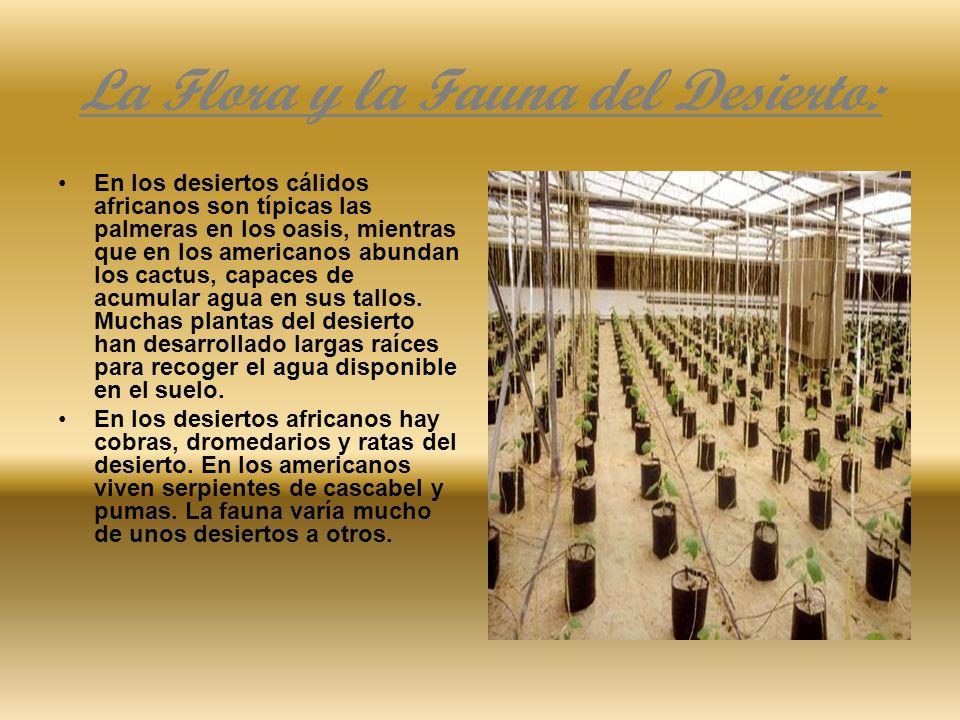 La Flora y la Fauna del Desierto: