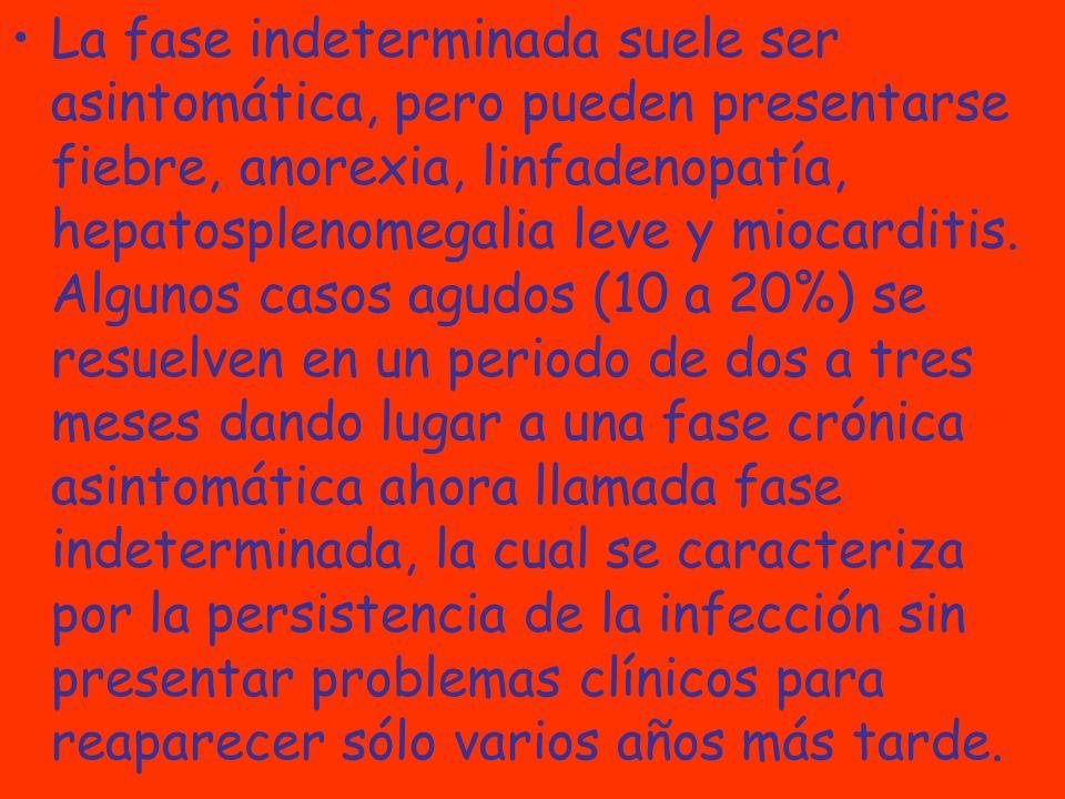 La fase indeterminada suele ser asintomática, pero pueden presentarse fiebre, anorexia, linfadenopatía, hepatosplenomegalia leve y miocarditis.