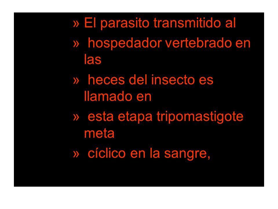 El parasito transmitido al