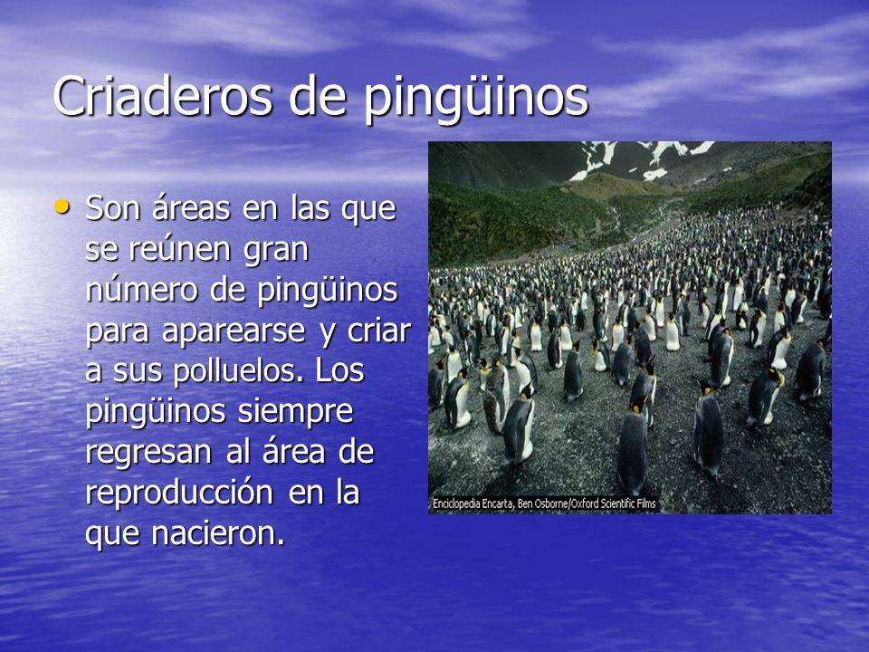 Criaderos de pingüinos