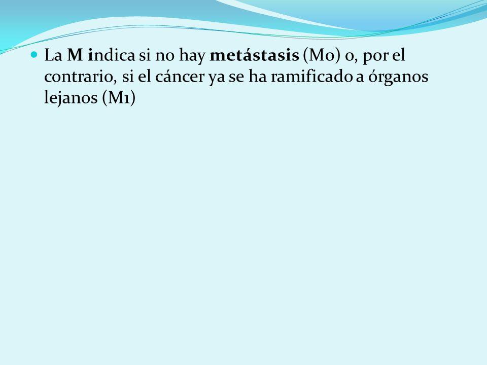 La M indica si no hay metástasis (M0) o, por el contrario, si el cáncer ya se ha ramificado a órganos lejanos (M1)