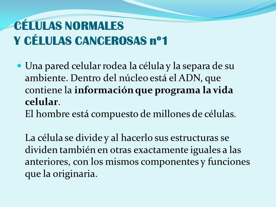 CÉLULAS NORMALES Y CÉLULAS CANCEROSAS nº1