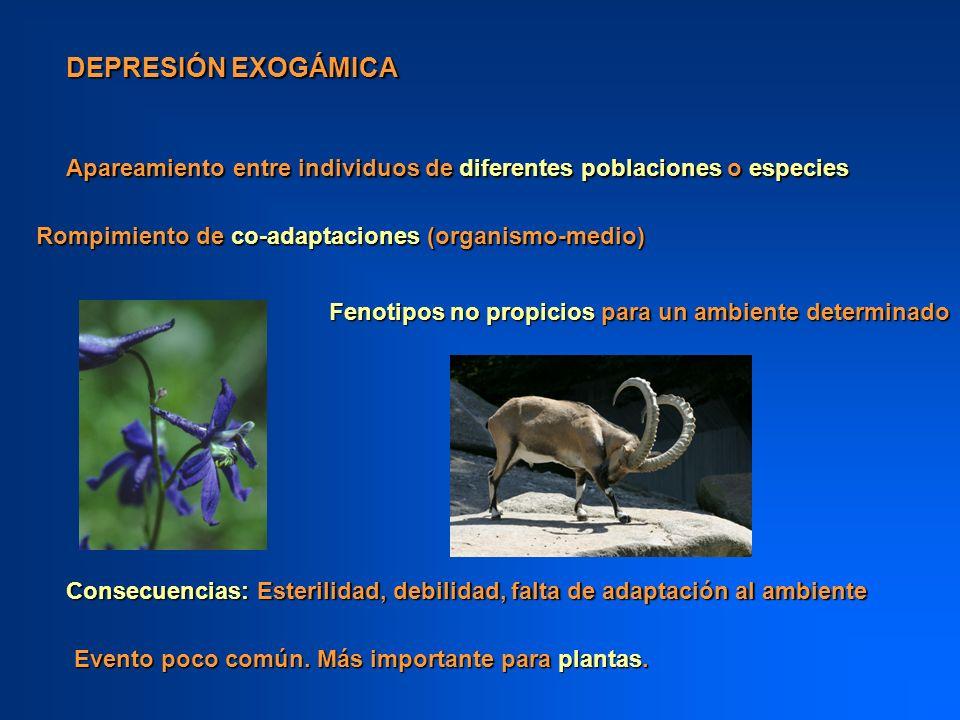 DEPRESIÓN EXOGÁMICA Apareamiento entre individuos de diferentes poblaciones o especies. Rompimiento de co-adaptaciones (organismo-medio)