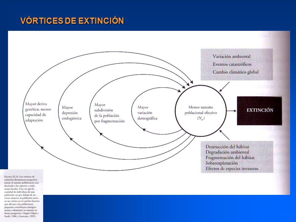 VÓRTICES DE EXTINCIÓN