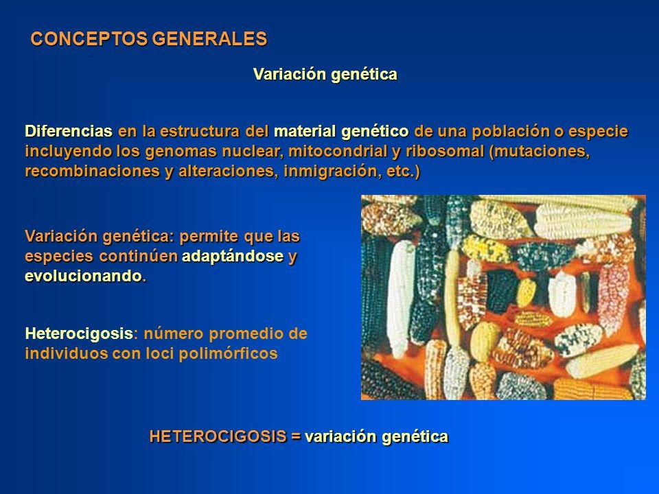 CONCEPTOS GENERALES Variación genética