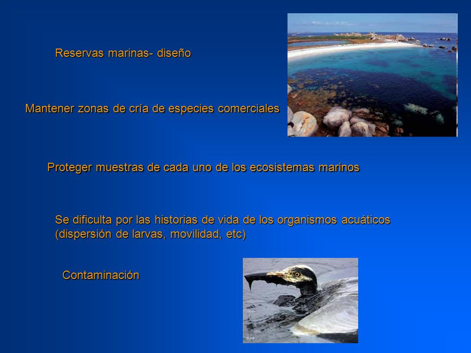 Reservas marinas- diseño