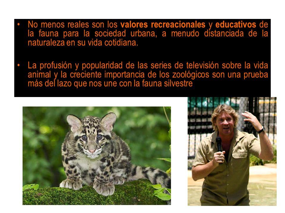 No menos reales son los valores recreacionales y educativos de la fauna para la sociedad urbana, a menudo distanciada de la naturaleza en su vida cotidiana.