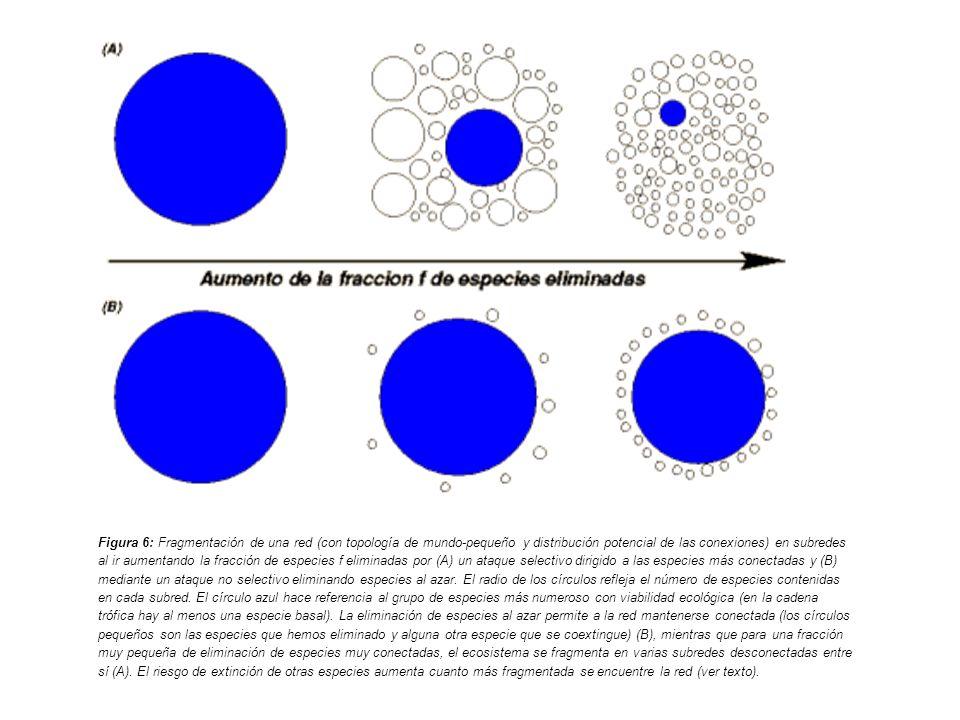 Figura 6: Fragmentación de una red (con topología de mundo-pequeño y distribución potencial de las conexiones) en subredes al ir aumentando la fracción de especies f eliminadas por (A) un ataque selectivo dirigido a las especies más conectadas y (B) mediante un ataque no selectivo eliminando especies al azar.