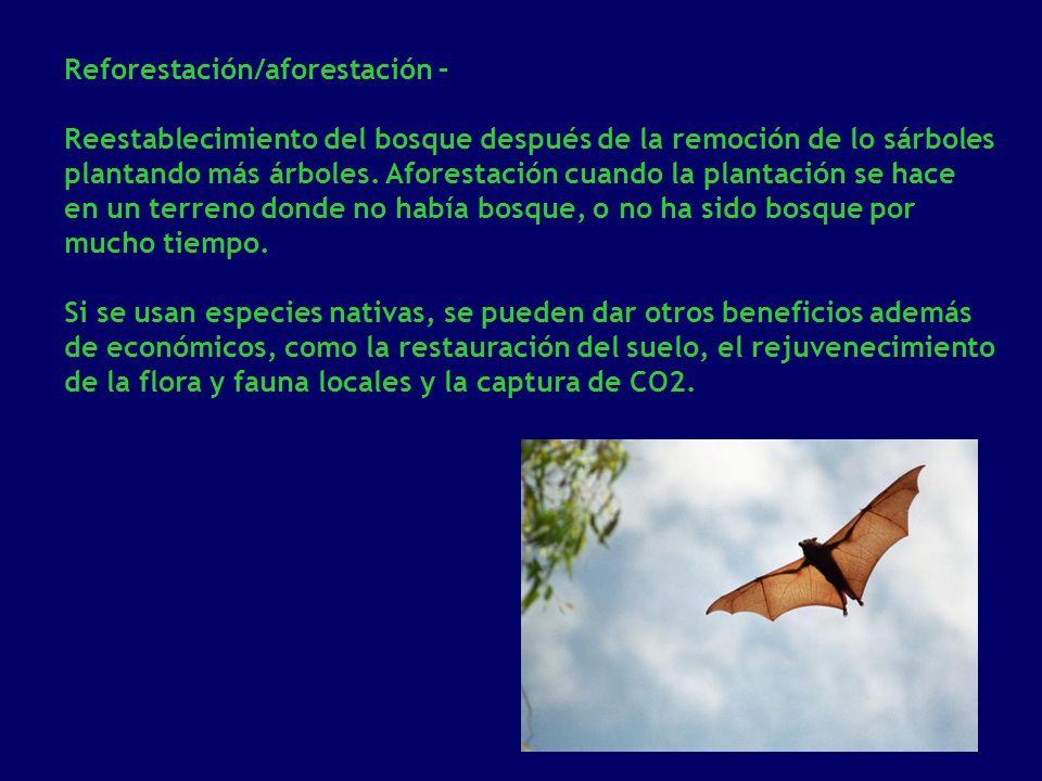 Reforestación/aforestación –